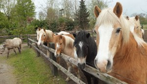 Tips voor trips - Ponyhof Leiting in Isselburg